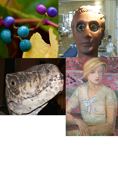 Collage of items from the museums at Uppsala University.