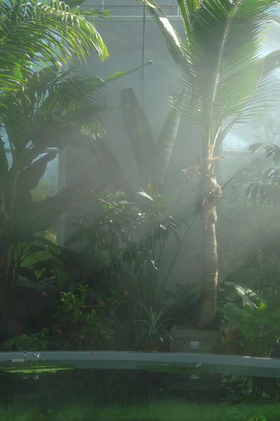 The Victoria Hall in The Tropical Greenhouse houses several useful plants from the tropics. The photo shows Manila hemp, traveller's palm and coconut embedded in mist..