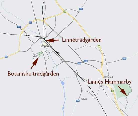 Map over Uppsala, showing the locations of the Botanical Garden, the Linnaeus Garden and Linnaeus' Hammarby.
